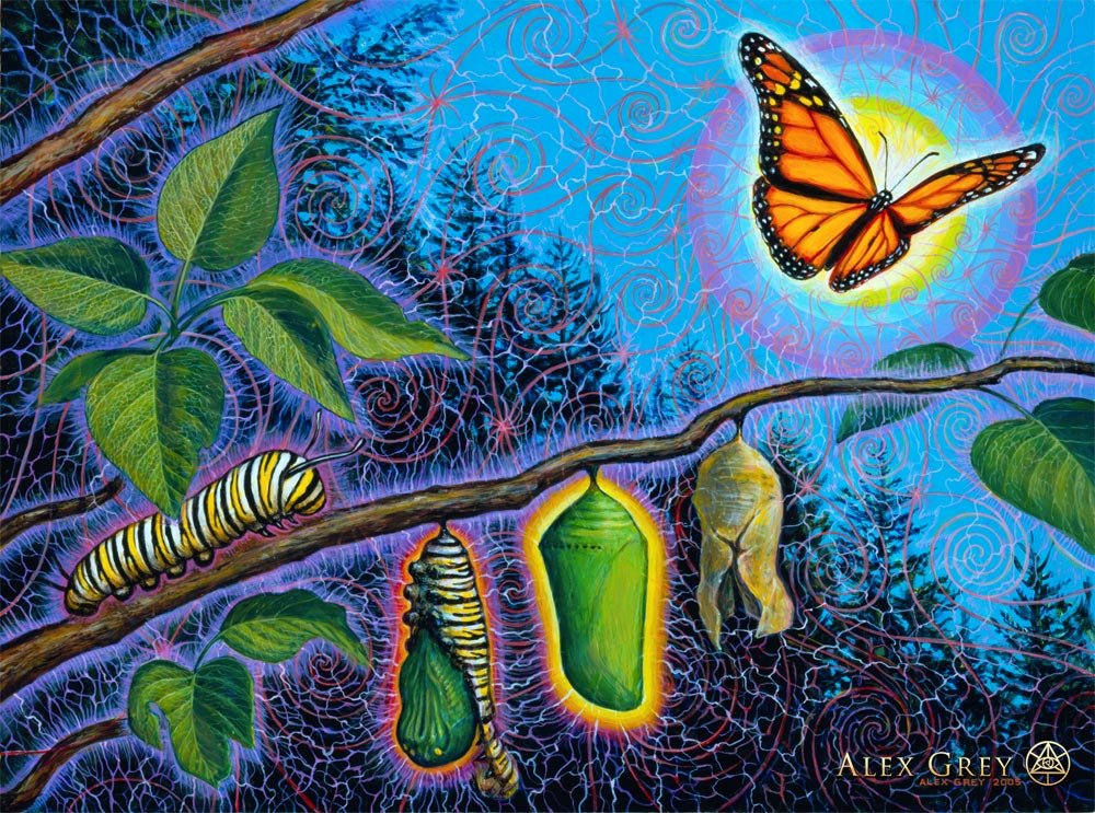 Progressive Near Me >> Metamorphosis - Alex Grey