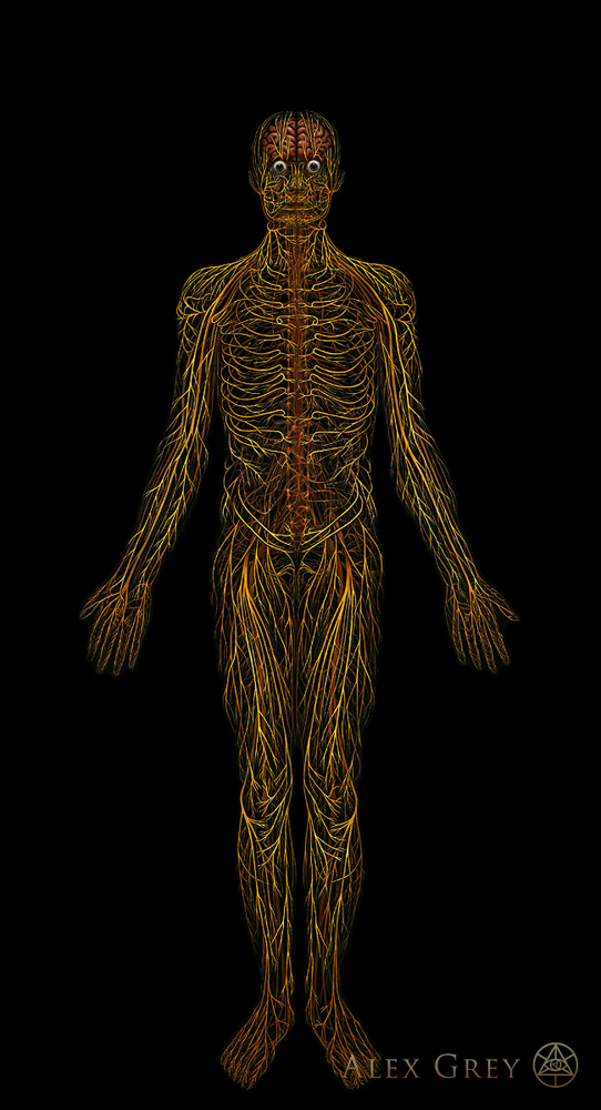 Raves Near Me >> Nervous System - Alex Grey