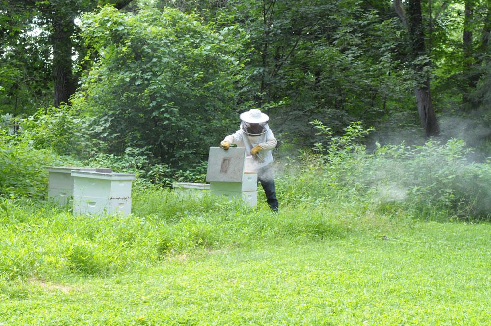 GeneStull-Matt-visionary-bee-workshop18